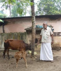 Chandran w calf